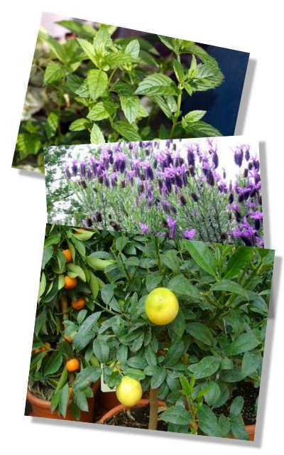 Fotómontázs növényekről